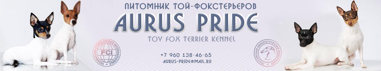 Питомник собак породы той-фокстерьер Aurus Pride
